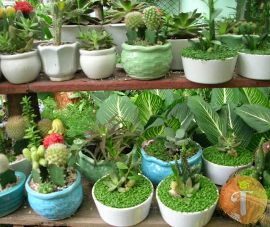 Địa chỉ mua bán cây cảnh để bàn dành cho văn phòng tại Đà Nẵng