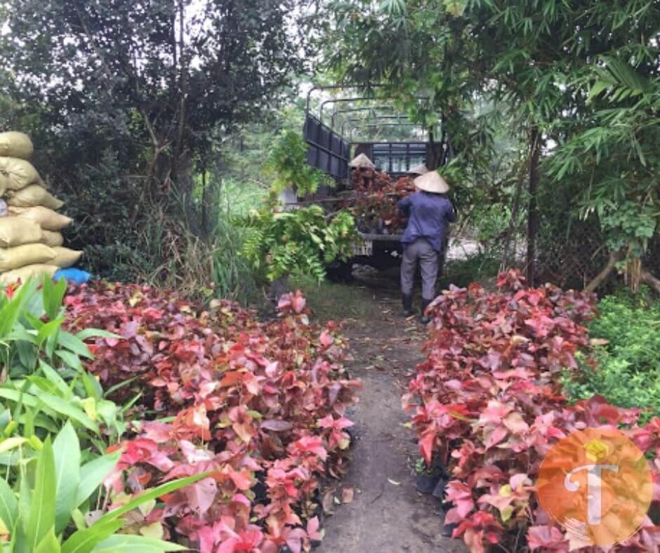 Vườn ươm cây cảnh Đà Nẵng