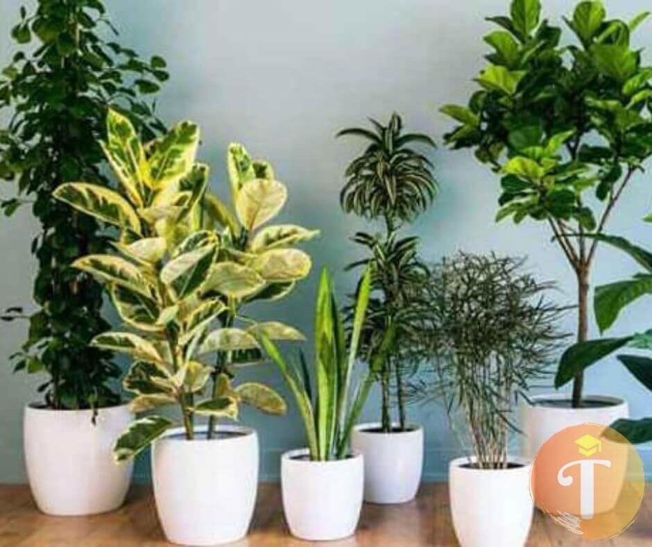 mua bán cây cảnh tại Đà Nẵng